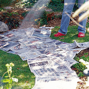 all created newspaper flower bed 1