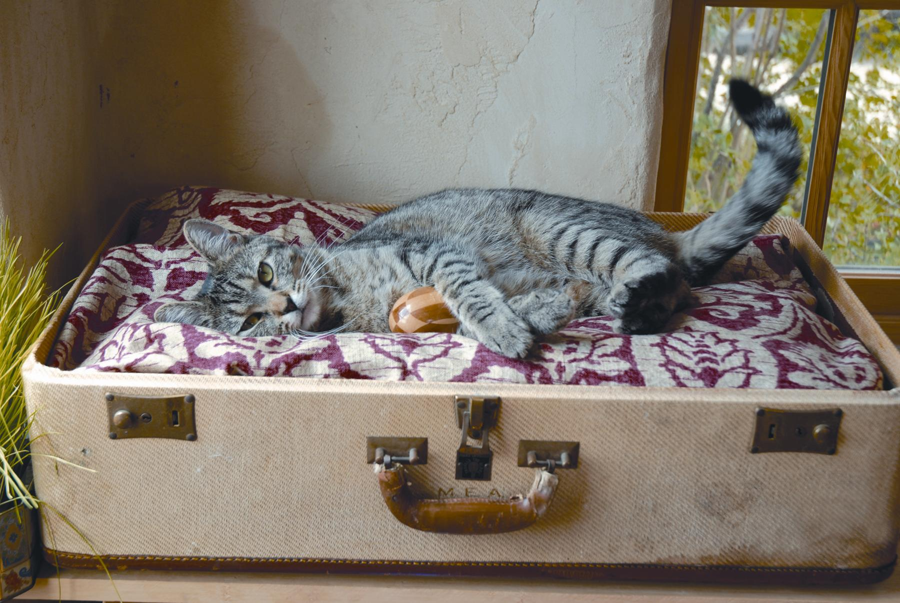 upcycle furniture into a pet bed, Innenarchitektur ideen
