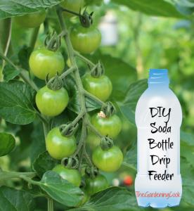 tomato-plant-drip-feeder-diy