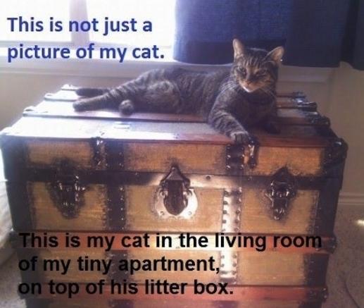 hidden litter box 14 ways to hide it. Black Bedroom Furniture Sets. Home Design Ideas