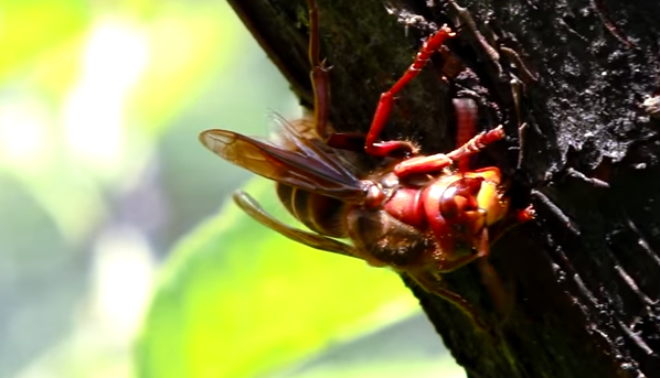 how to get rid of wasps at a bbq
