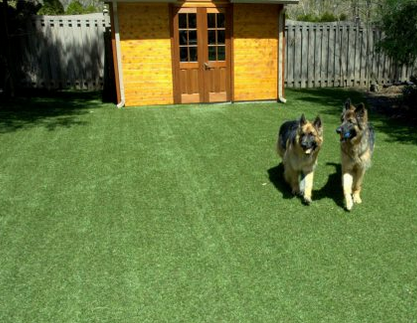 jm-allcreated-dog-beds-kennels-backyard-4