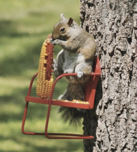 jm-allcreated-squirrel-feeders-DIY-10