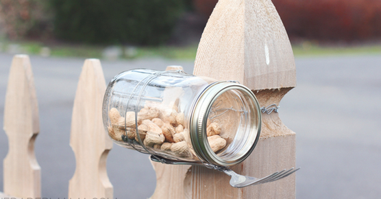 jm-allcreated-squirrel-feeders-DIY-7