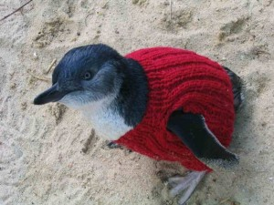 jm-allcreated-penguin-sweaters-2