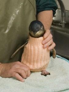 jm-allcreated-penguin-sweaters-4