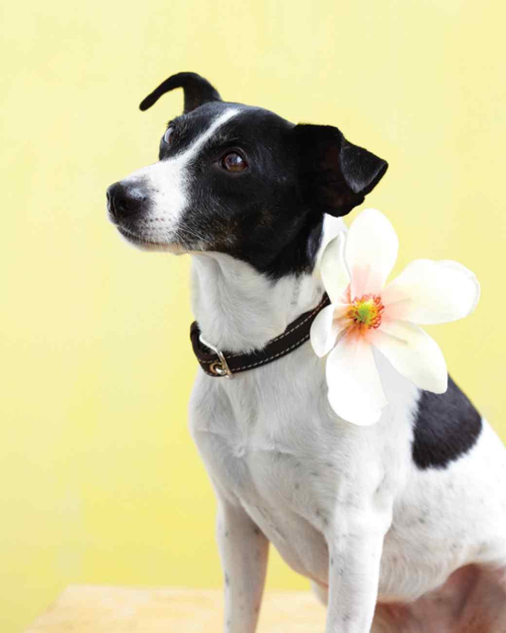 custom dog collar - AllCreated