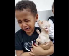 AllCreated - boy cries while holding puppy