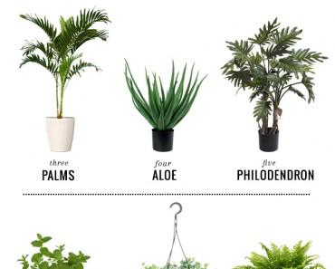 All Created - 11 Hard To Kill Plants