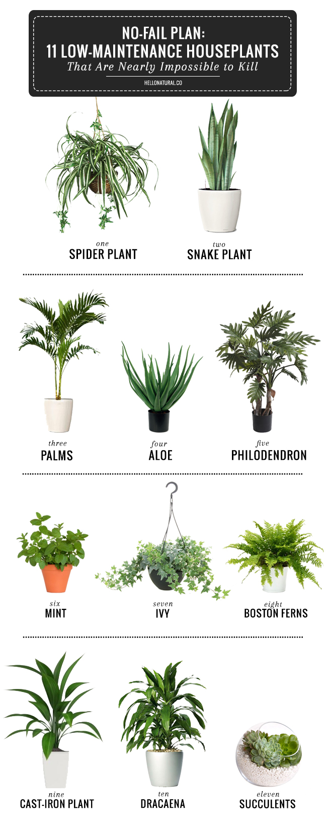 11 hard to kill plants all created for Plants that require no maintenance