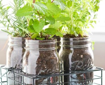 All Created - Mason Jar Indoor Herb Garden