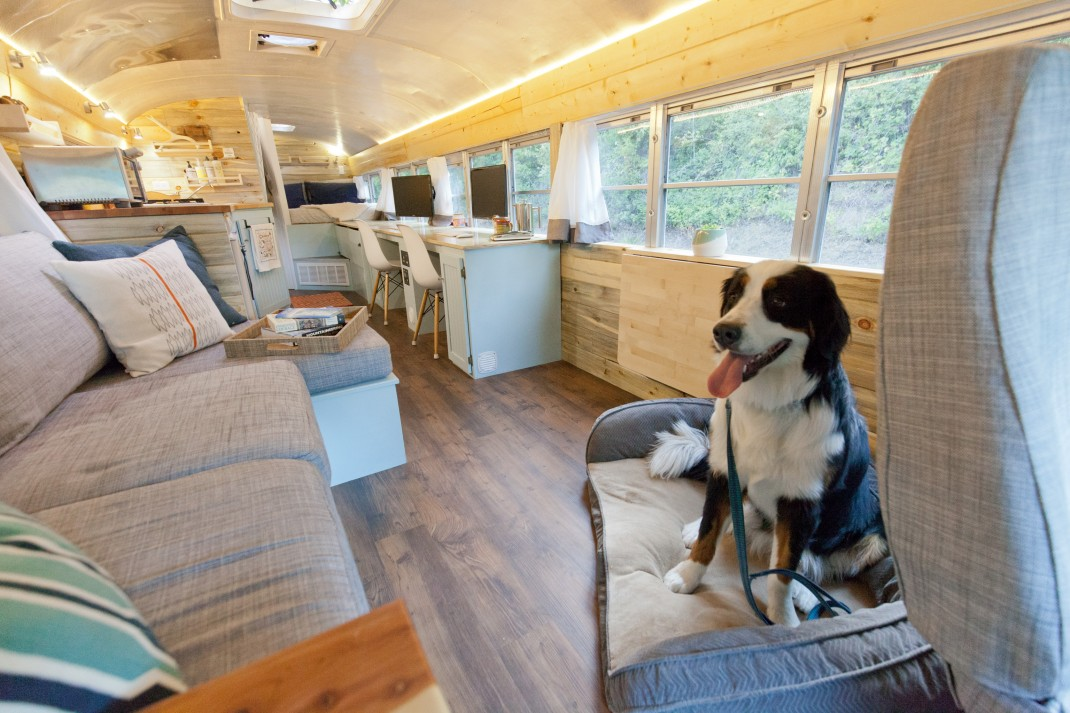 Dog Can T Get In Rv