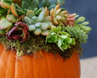 All Created - Pumpkin Succulent Decor