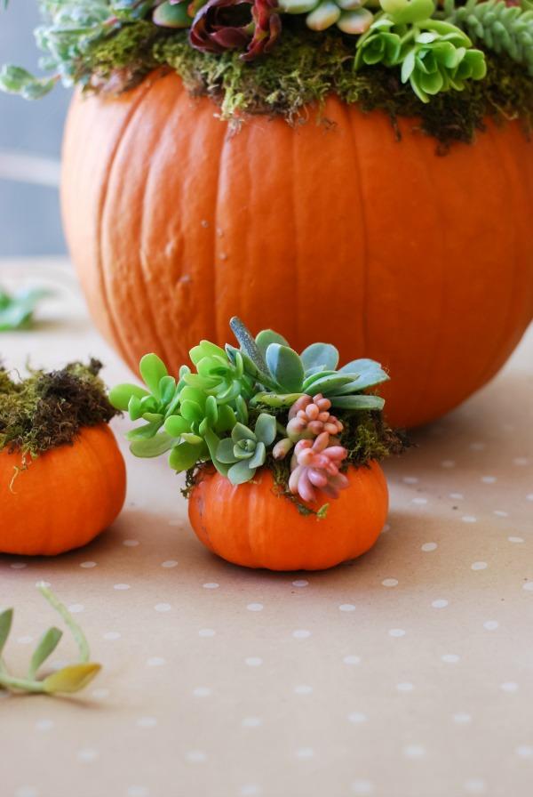 All Created - Pumpkin Succulent Decor 1