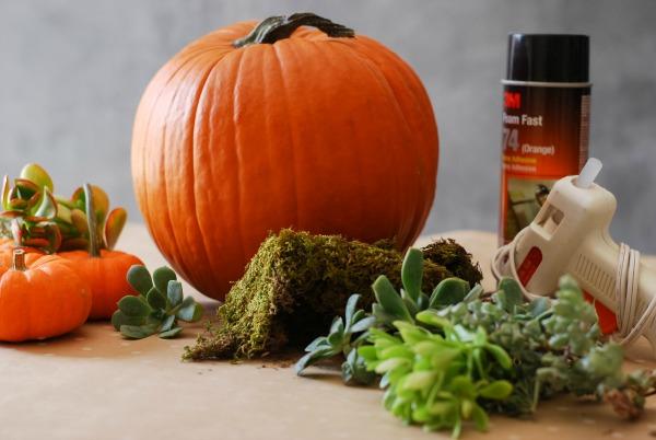 All Created - Pumpkin Succulent Decor
