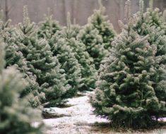 all created- best christmas tree