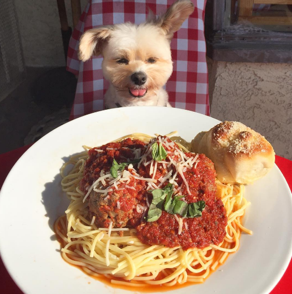 AllCreated - Popeye the Foodie Dog