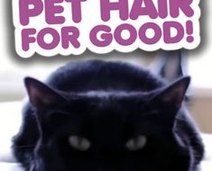 All Created - clean pet hair