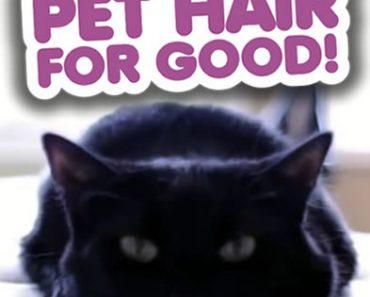 All Created - clean pet hair