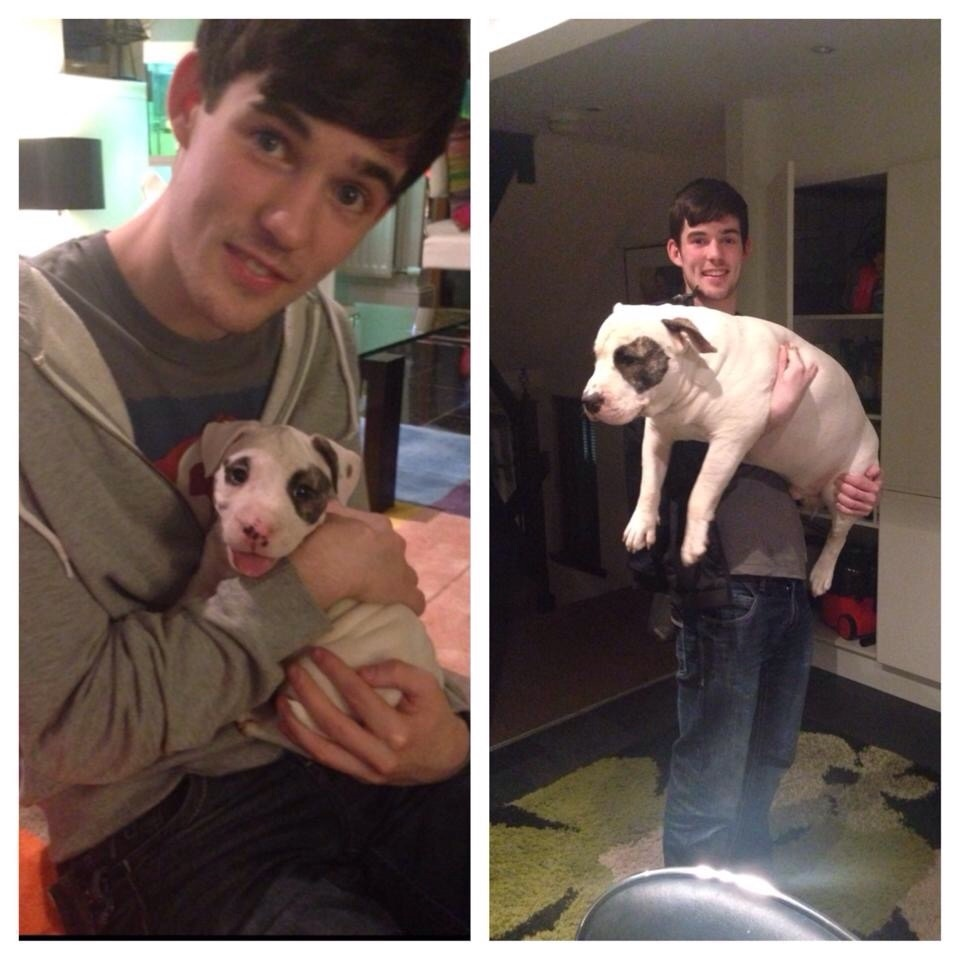 Dogs Recreated Photos _ Man holding friends dog _ allcreated