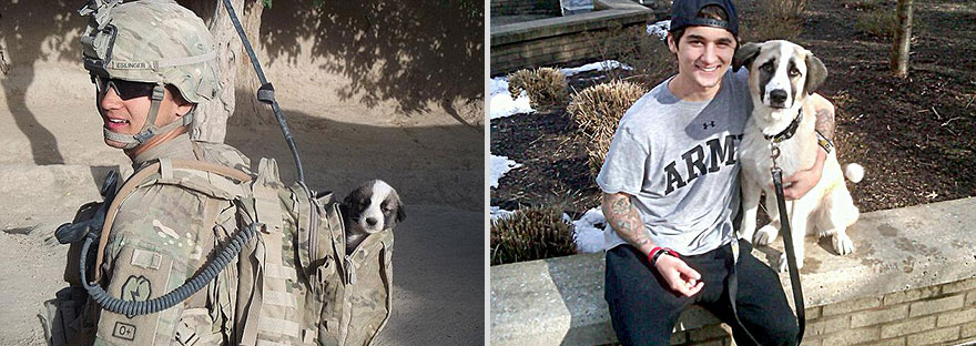 Dogs Recreated Photos _ Military Man and Dog _ allcreated