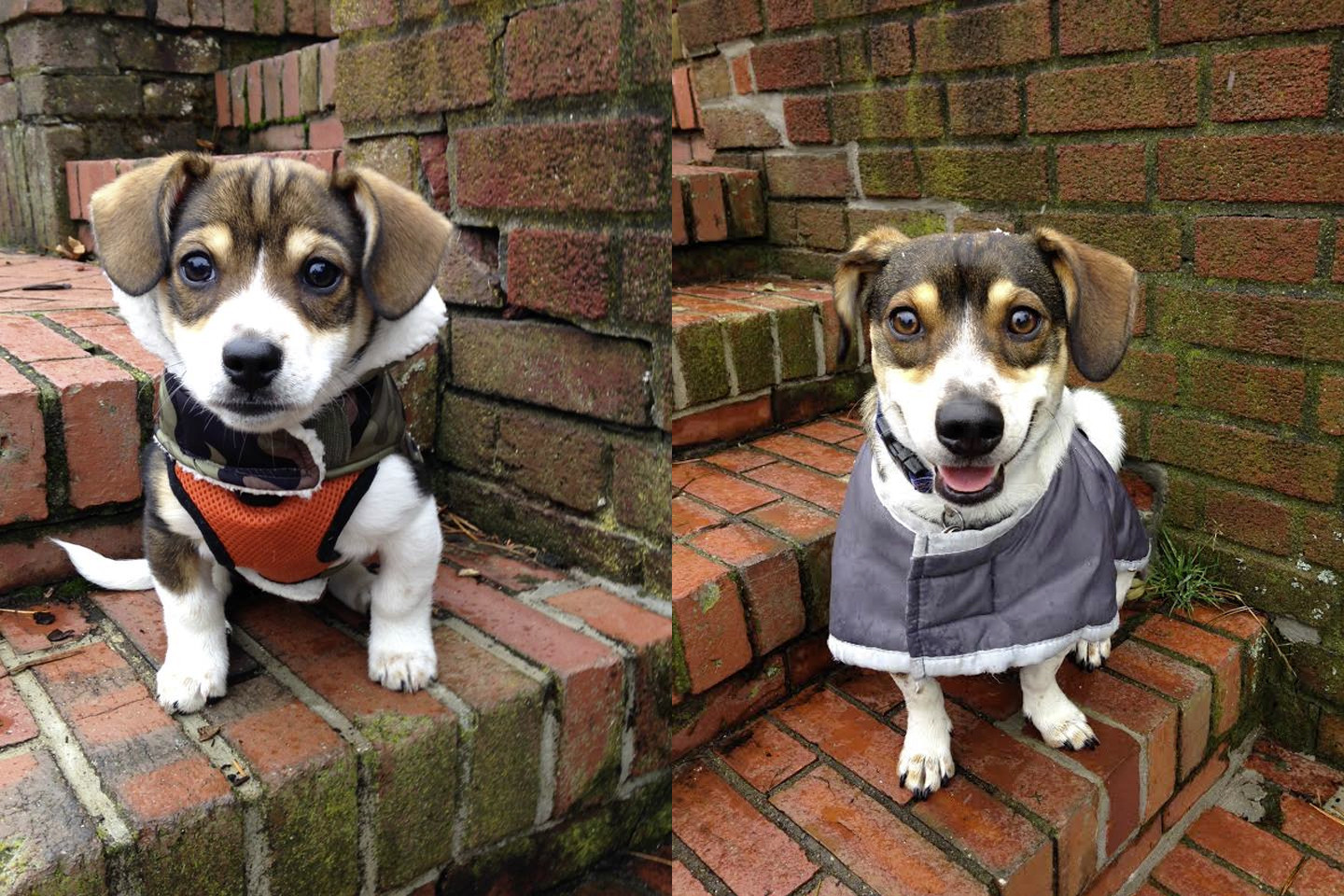 Dogs Recreated Photos _ Tiny dog brick wall _ allcreated