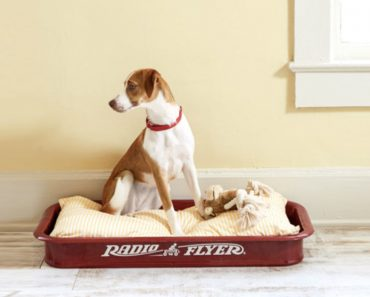 upcycle red wagon_petbed_allcreated