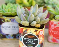 DIY Cactus Garden Makeovers From The Bargain Bin _ all created