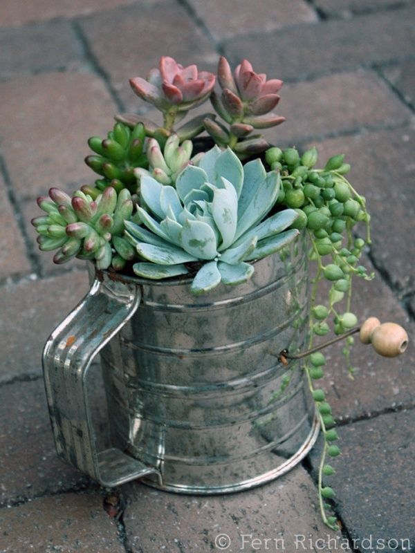 DIY Cactus Succulent Garden Makeovers From The Bargain Bin _ flour sifter _ all created