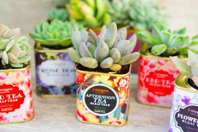 DIY Cactus Succulent Garden Makeovers From The Bargain Bin _ tea tins _ all created