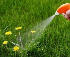 Three Ingredient DIY Weed Killer _ all created