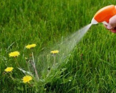 Three Ingredient DIY Weed Killer _ all created