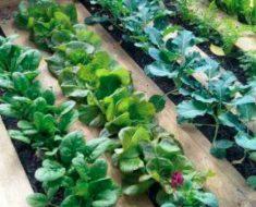 allcreated - DIY pallet garden