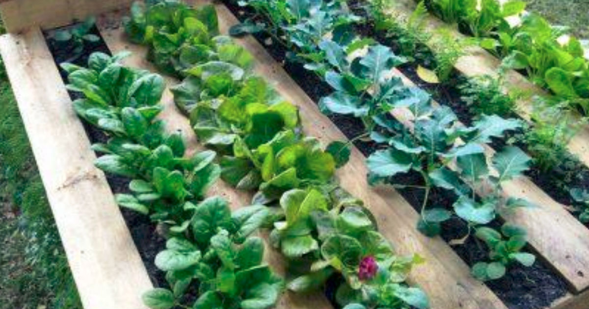 Diy Pallet Garden Instructions Will Deliver A Raised Bed In 3 Easy