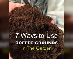 allcreated - coffee ground garden hacks