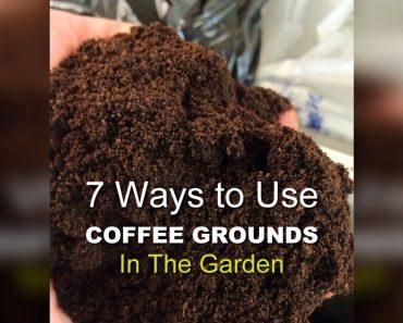 allcreated - coffee ground garden hacks