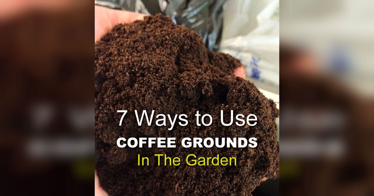 7 coffee ground garden hacks that will turn your thumb green Coffee grounds for garden