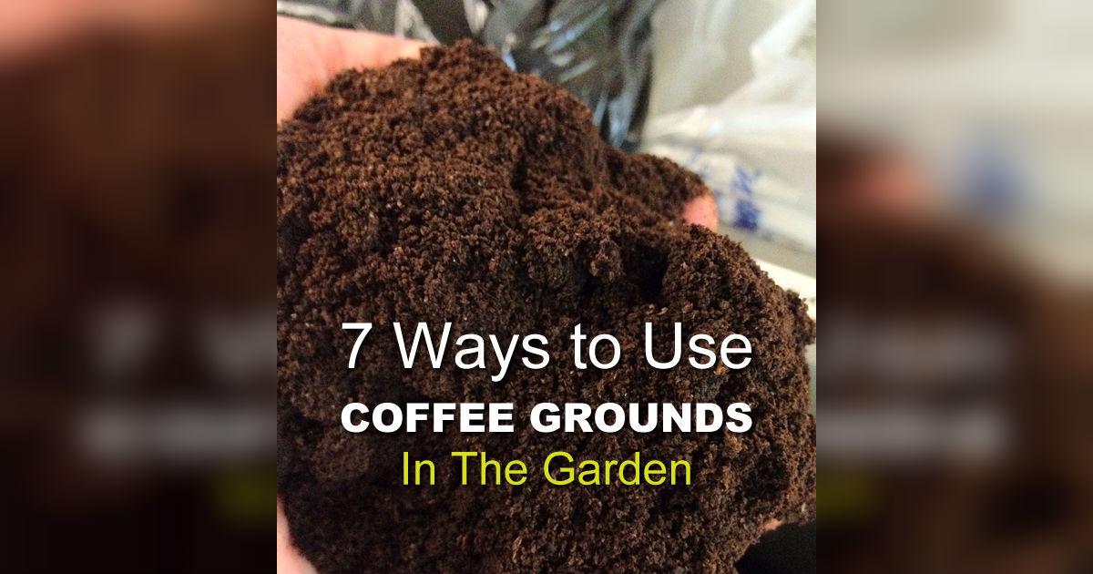 coffee grinds in garden