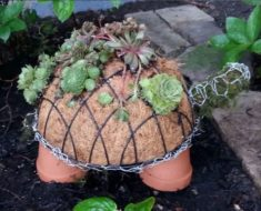 allcreated - diy succulent turtle