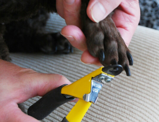 allcreated - how to trim your dog's nails