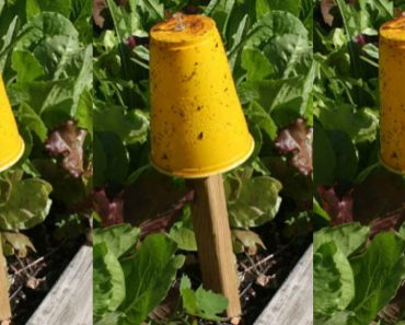 allcreated - diy aphid trap