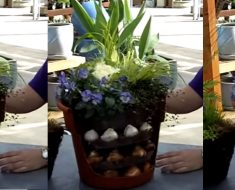 allcreated - bulb container gardening