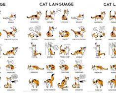 allcreated - cat body language