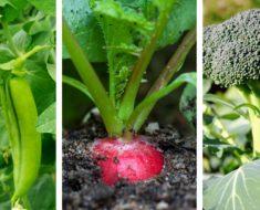 allcreated- late summer vegetable garden