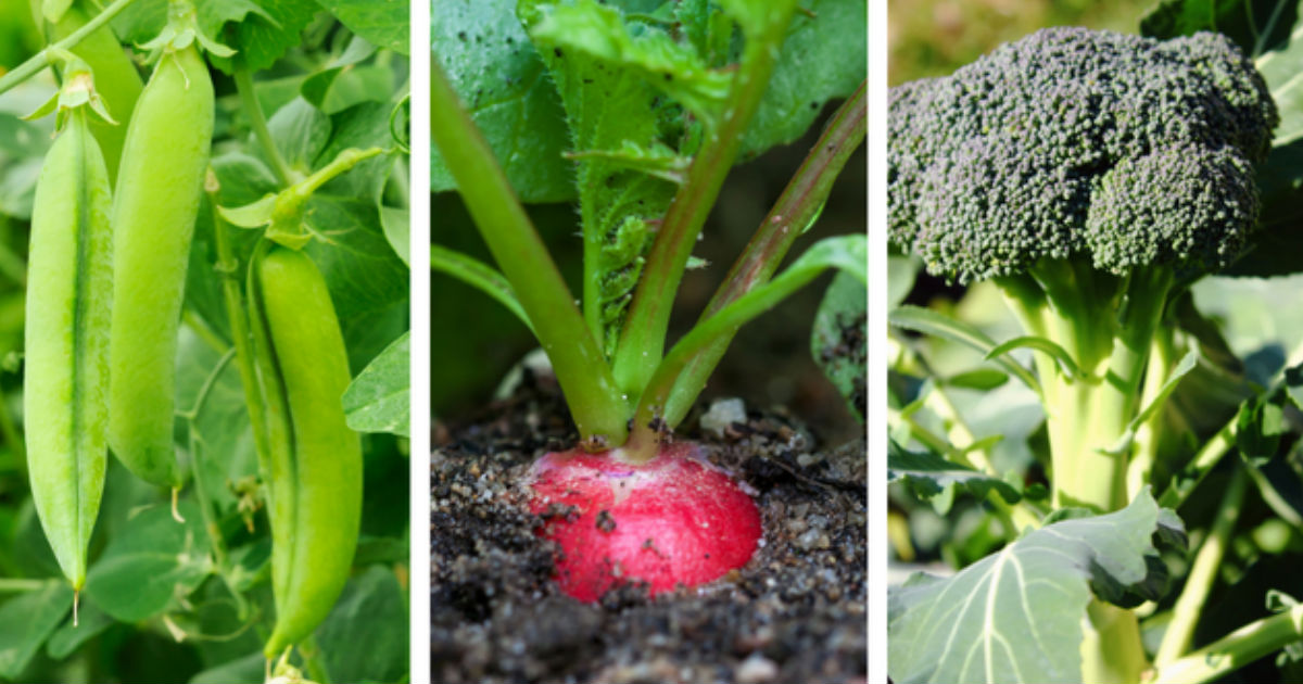 Late Summer Vegetable Garden Suggestions By Zone
