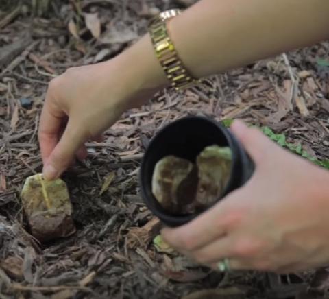 allcreated - used tea bags help gardens