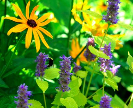 allcreated - planning a budget perennial garden