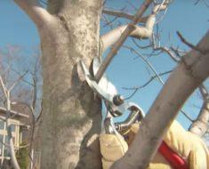 allcreated - prune trees