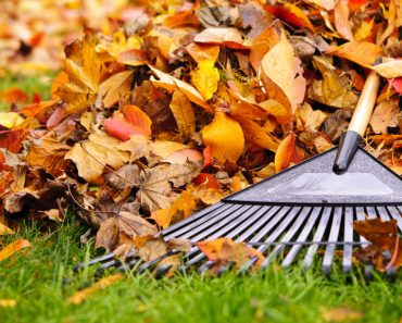 allcreated - rake leaves