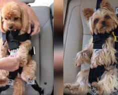 allcreated - dog seat belt